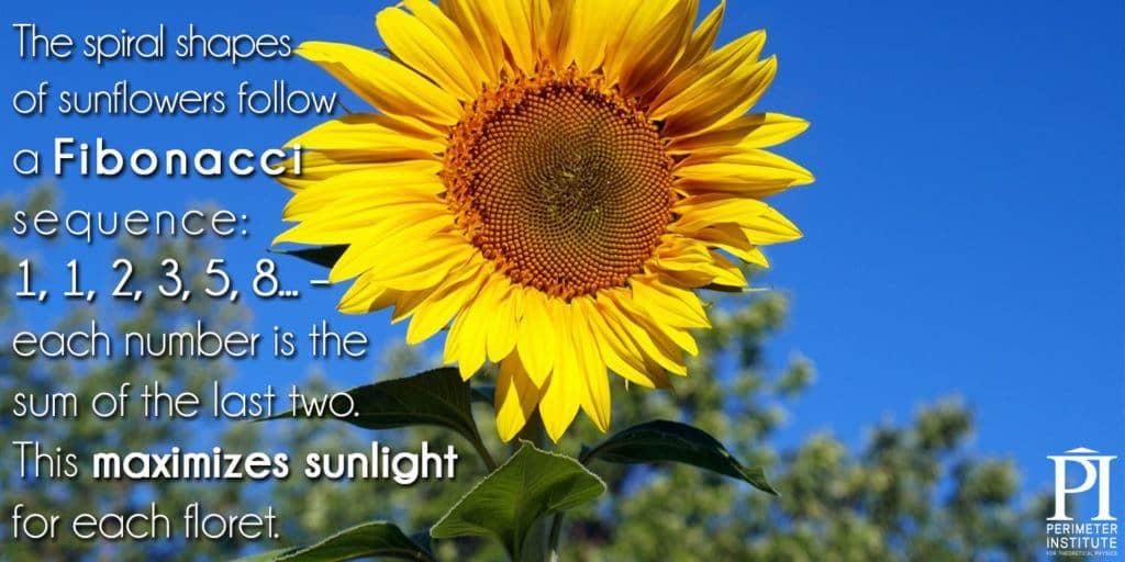 meme3-sunflower2_0