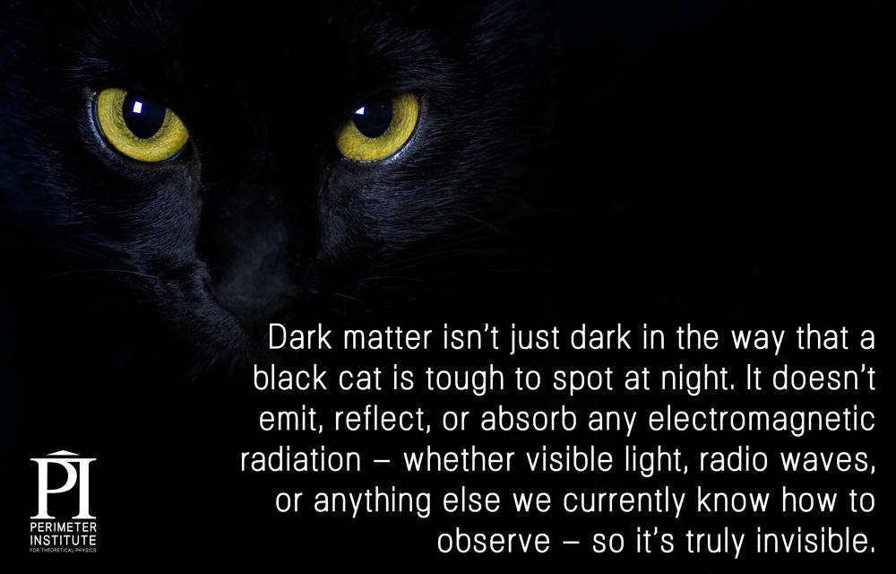 5-black-cat
