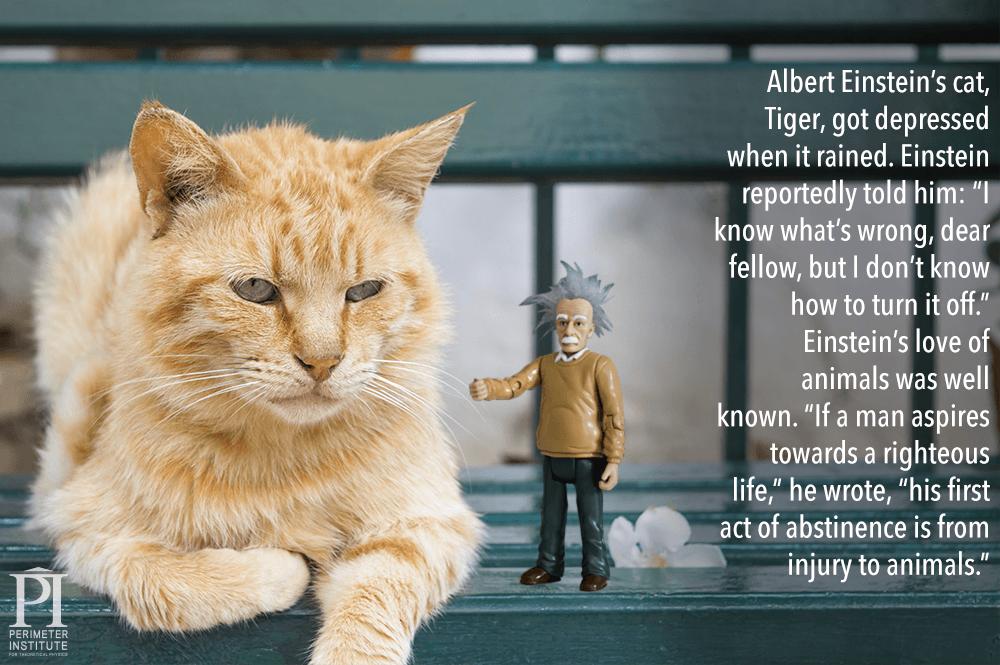Einstein-cat