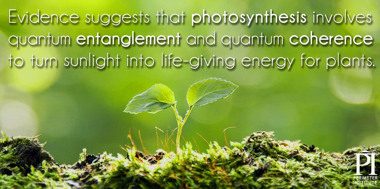 Meme1-photosynthesis2_1