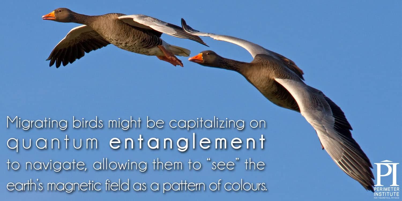 Meme4-migrating_birds2_0