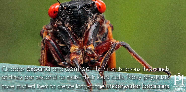 Meme7-Cicadas2_1