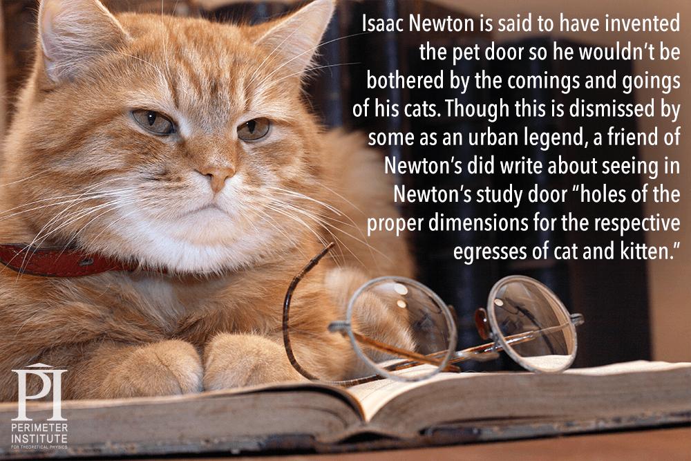 newton-cat