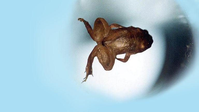 Levitating frog on light blue background
